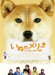 小狗Merry:承載幸福的傳信犬